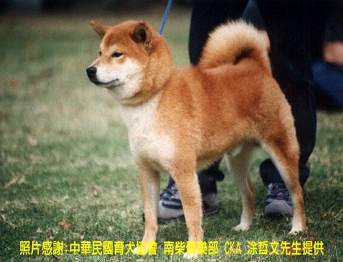 2011 05 12 11 42 狗的種類
